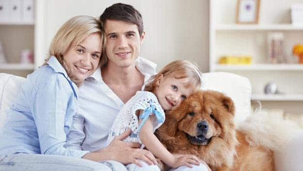 Wills & Trusts dog-young-family Direct Wills Higham Hill